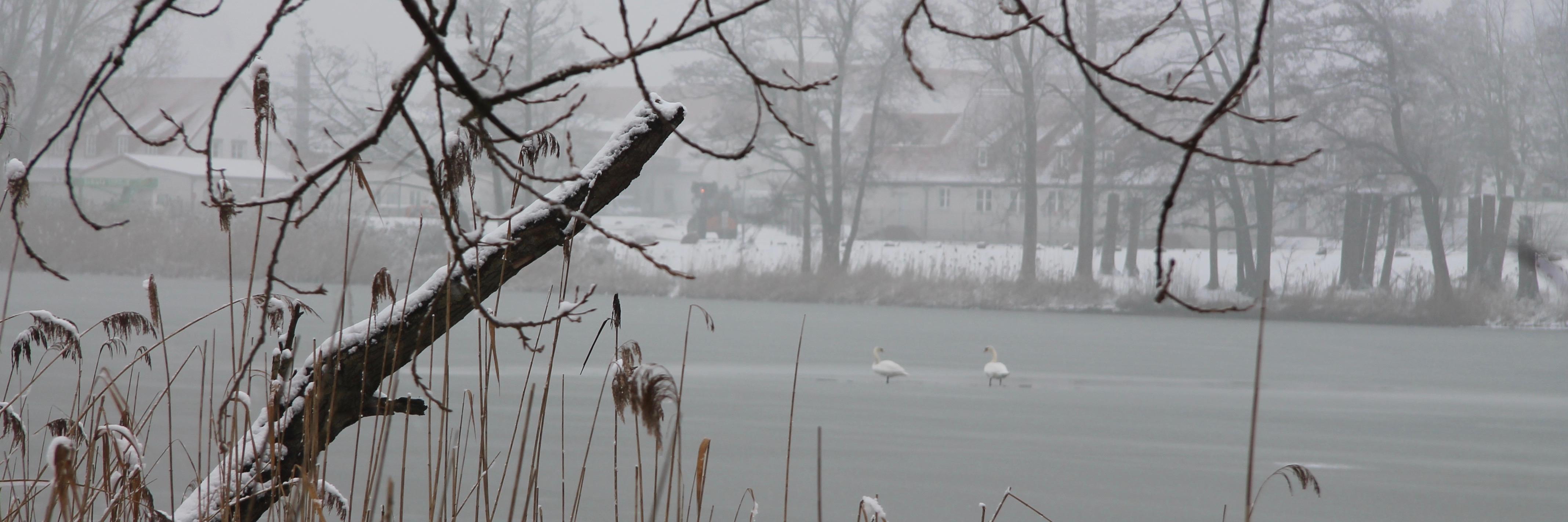 180301 Klietz Winter 19400
